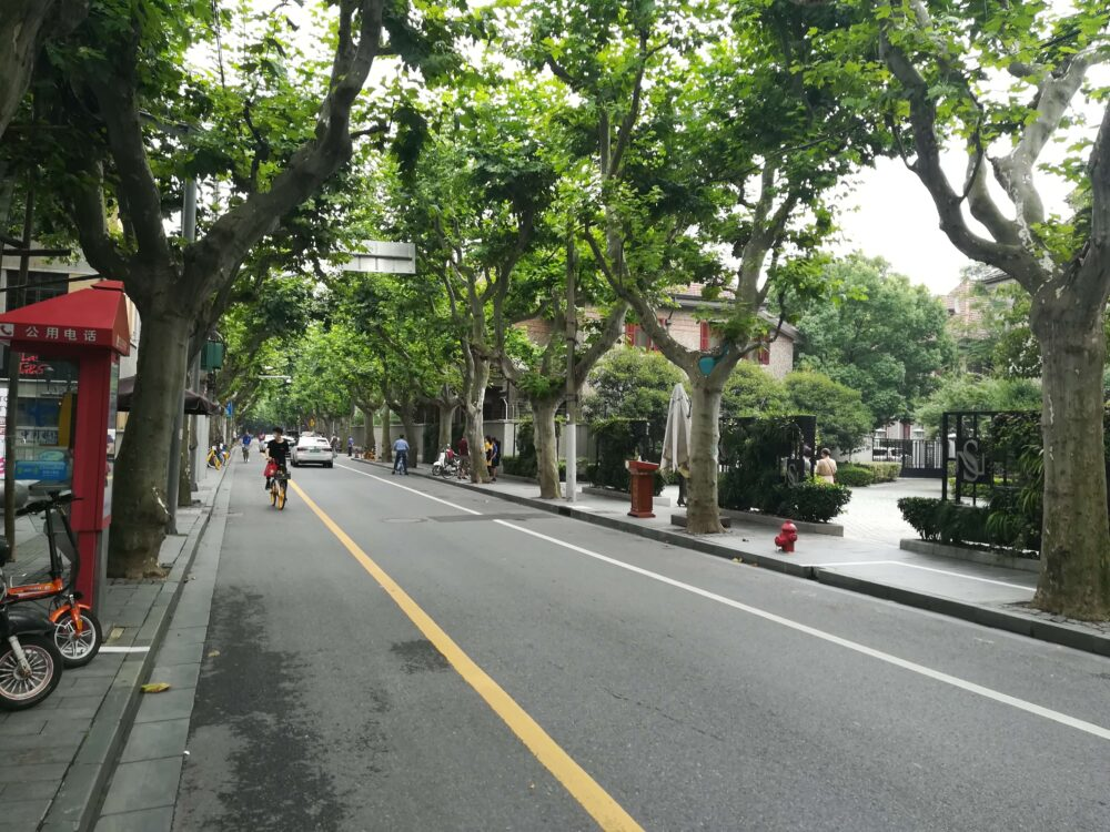 思南公館のプラタナスの並木道の写真