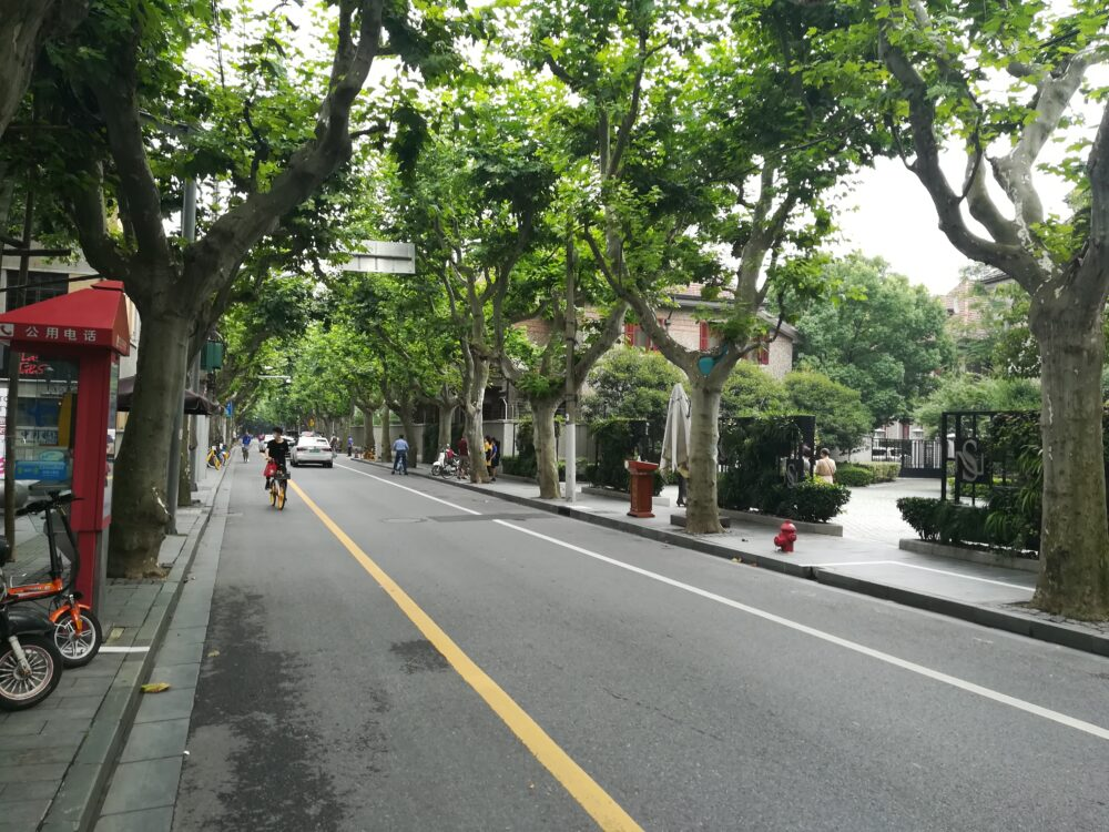 思南公館周辺のプラタナスの並木道の写真